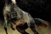 Cavalli... Che Passione!