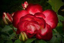 Цветы на фото