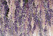 Lavender Wedding Inspiration / Lavender wedding inspiration, decor, and ideas / by Elli