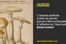 Citations d'Audiard/Audiard du Lundi / #Citations de Michel #Audiard, grand nom du #cinéma #français mises en image par Les Tontons Codeurs