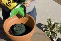 Container Gardening / by The Perfect Garden Hose