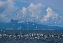 Seabirds of the Hauraki Gulf Marine Park