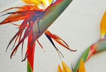 tropical plant paintings