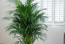 plantes par pieces