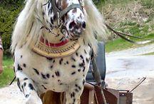 HORSE 5 / by Liz Snyder
