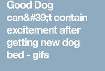 Doggie video's