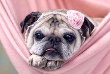 Pug life / by Janis Watson