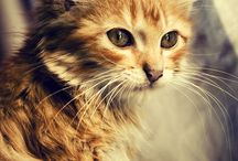 Lajky z Pinterestu / Na pinech rušíme tlačítko Lajk. Žádný strach, své staré lajky najdete zde.