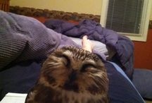 Aww cute critters & Sad stories / by Rosie Duran