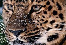 animals preciosos