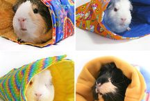 guinea pigs / by Michelle Cartwright
