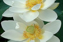 Flor do dia  / cada flor tem sua essência ...