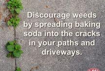 Weeds between pavers
