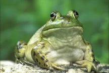 Amphibians / by Barbara Fromme Lauricella