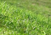 The Grass is Always Greener With DeClark's