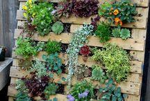 Növény ültetési helyek