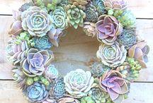 beauty plants