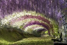 Garden Inspirations / by Erica Althans-Schmidt