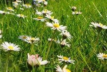 Bloemen & planten....... genoemd in het boek Desiree