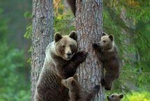Animals Wild / by Leslie Graham