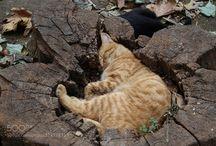 Kočky/Cats / cats