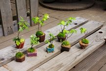*Green & Flowers* 盆栽 mediocrity bonsai