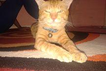 TieTie / my litle kitty