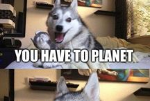 Pun dog jokes