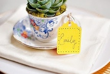 Lily Spruce Loves: Succulents