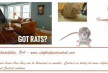 Rodent Pest Control in Philadelphia / Rodent Pest Control in Philadelphia, Check out http://www.citybestpestcontrol.com/rodents/