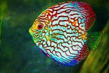 pez disco dos