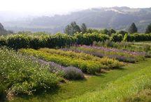 Casola Valsenio (RA), Italy / #destination #food #heritage #CasolaValsenio