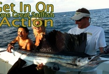 Deep Sea Fishing Miami - Spellbound / Deep Sea Fishing pictures from deepseafishingmiami.com & Spellbound