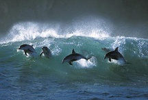❤Dolphin❤Joy / beautiful and human-like / by Dena Queen Tut