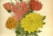 Flowers / by Chari Skibicki