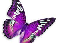 Motýl obrázek