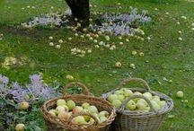 autumn czyli jesień