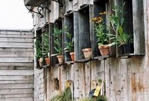 Roofgarden / Potted roof garden in Southern Italy