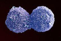 Kolon Kanseri Moleküler Biyolojisi