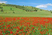 Bellezza della mia terra