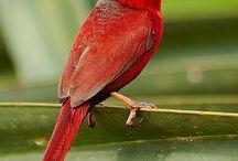 MORE SMALL BIRDS