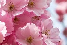 Pink Fleurs / by Suzy Andriani