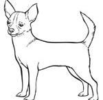 Buddy Boy Chihuahua / Chihuahua love - Especially my Buddy / by Barbara Miller