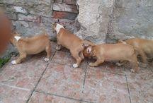 Az én kutyáim