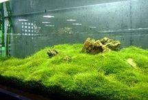 acvaristica