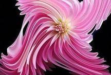 unusual/beautiful flowers