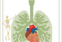 Le corps humain / Lapbook du corps humain de l'Association Carpe Diem