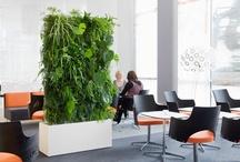 Room Divider Green