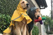 cani da pioggia
