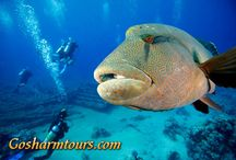 Ras Mohammed National Park snorkeling excursion